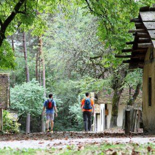 Forêt de Chaux, aux Maisons du