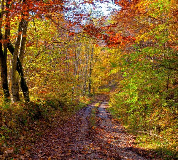 Chemin en sous-bois à l'automne