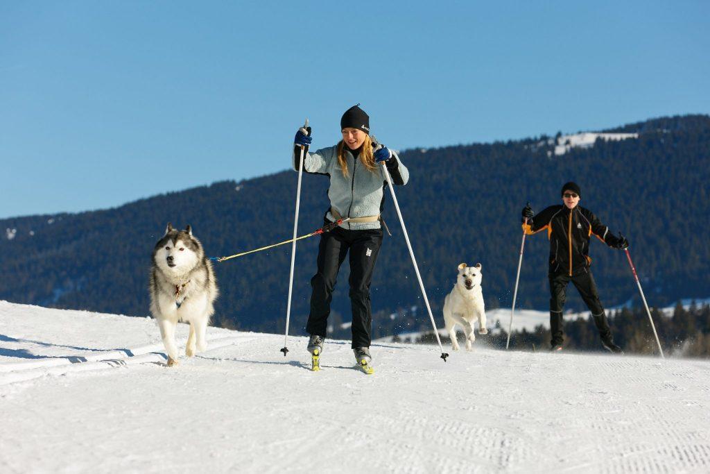 Cani-ski fond dans le Haut Jura