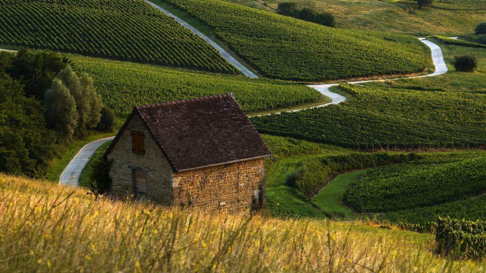 Route dans les vignes du Vernois