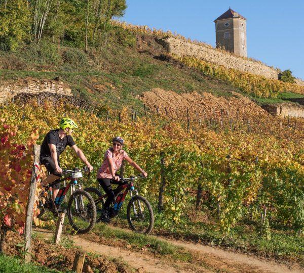 VTT électrique dans les vignes d'Arbois