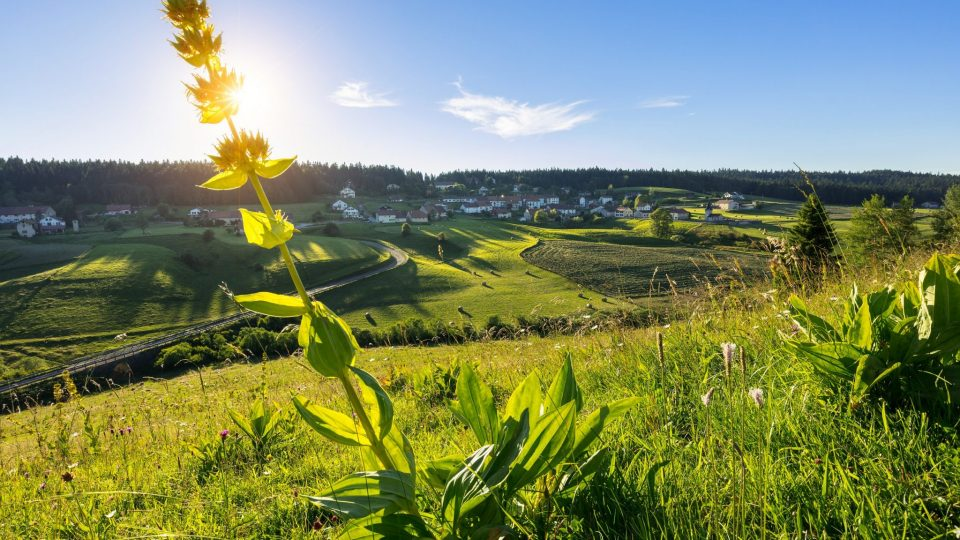 Gentiane et village des Piard