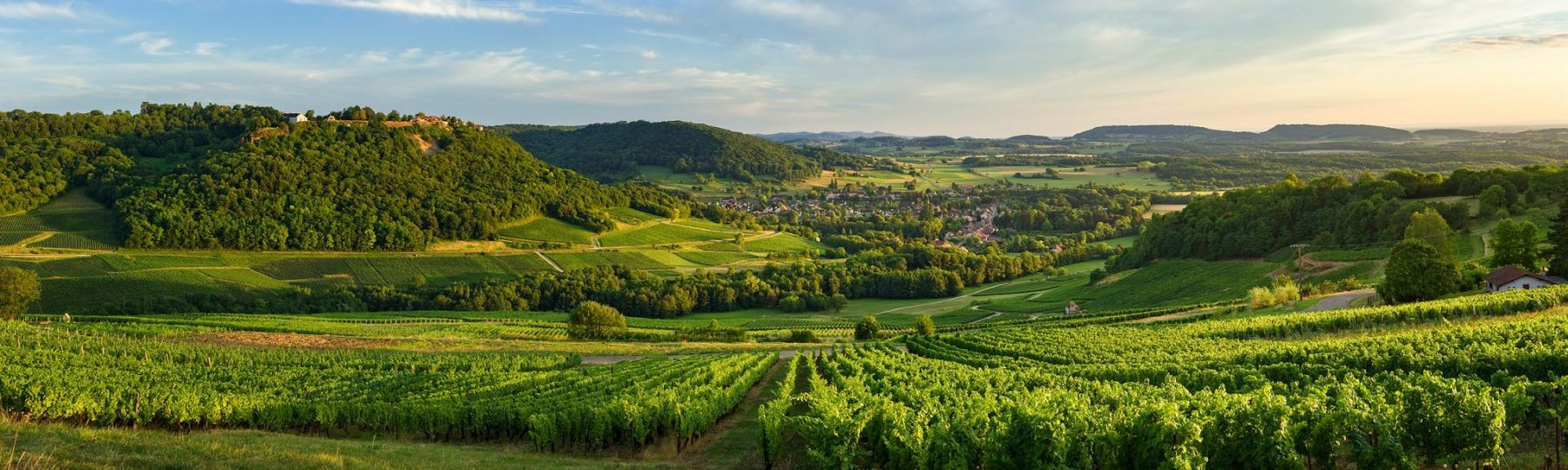 Vue sur les vignes depuis Menétru-le-Vignoble © Stéphane Godin/Jura Tourisme
