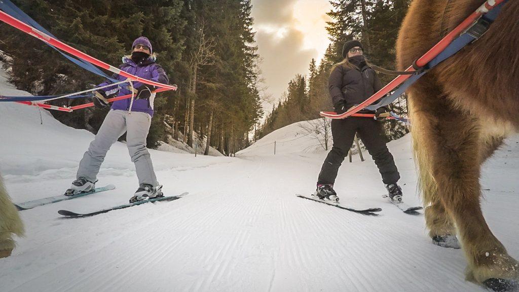 Ski Joering dans le Haut-Jura