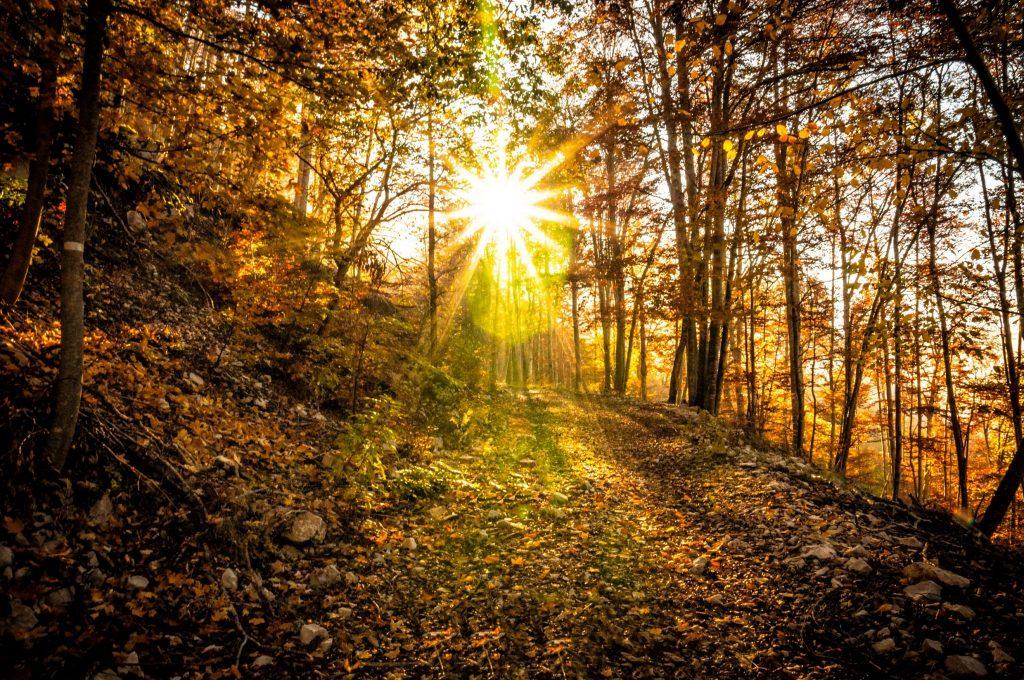 Sous-bois en automne © Vincent Edwell/JuraTourisme