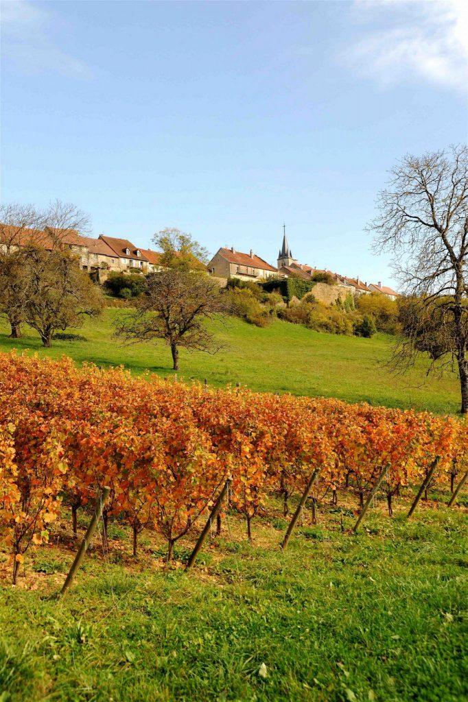 Vignes en contre-bas du village de Montaigu © Michel Campy