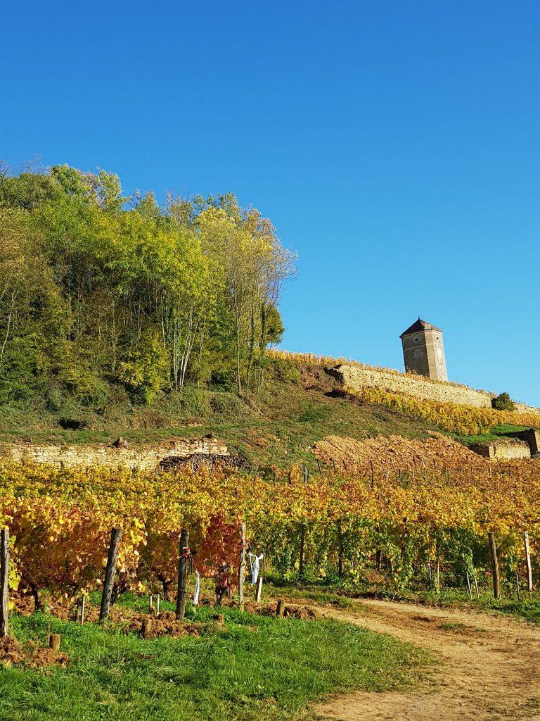 Tour de Curon dans le vignoble Arboisien © Jura Tourisme