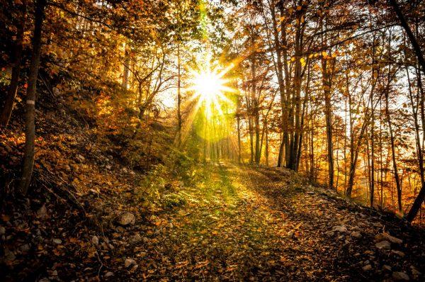 Je suis partie à la rencontre des arbres remarquables du Jura…