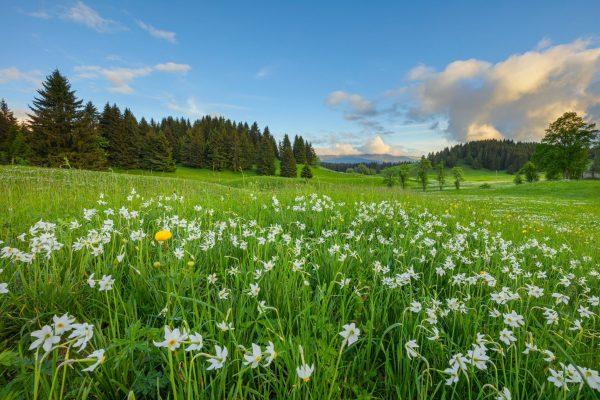 Fraîcheur, nature & adrénaline : le Haut-Jura en été !