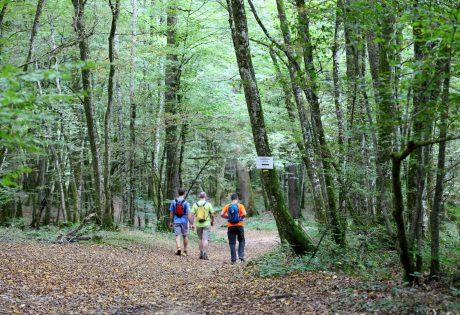 Randonneurs en Forêt de Chaux © Vincent Gaudin/Jura Tourisme