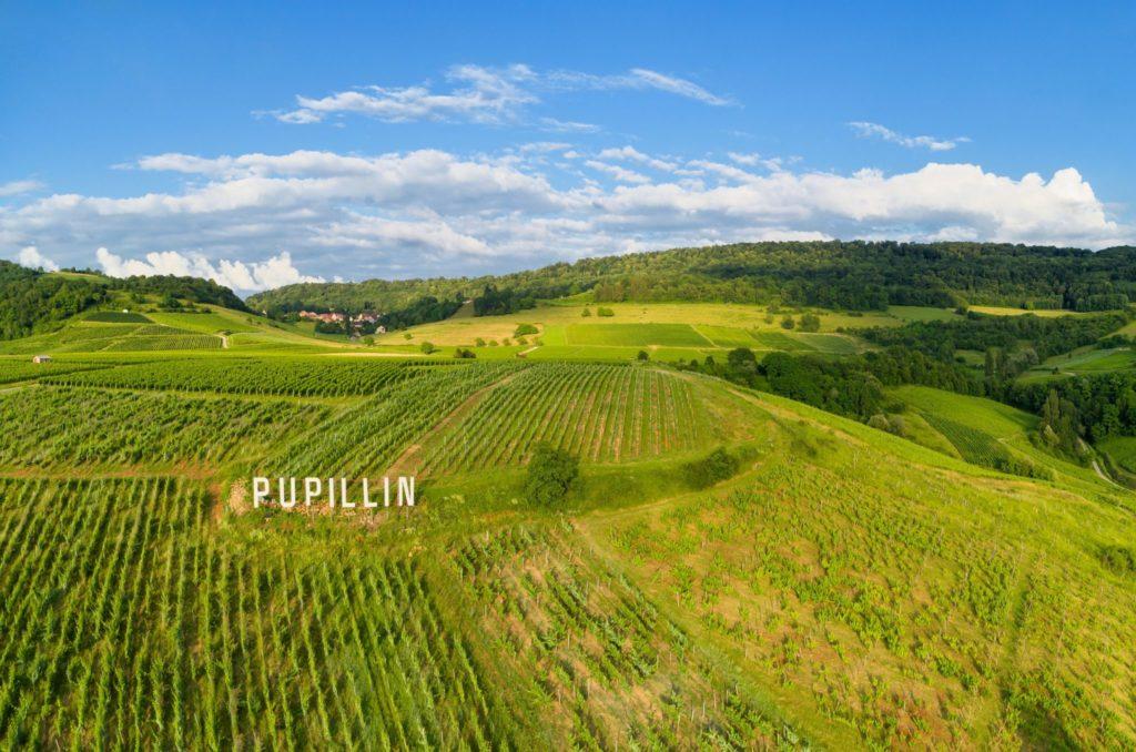 Vignes de Pupillin © Stéphane Godin/Jura Tourisme