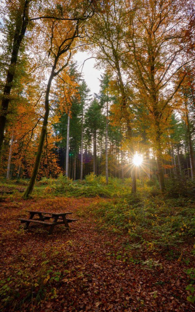 Forêt de Presilly © Quentin Danel / Office de Tourisme Pays des Lacs et Petite Montagne