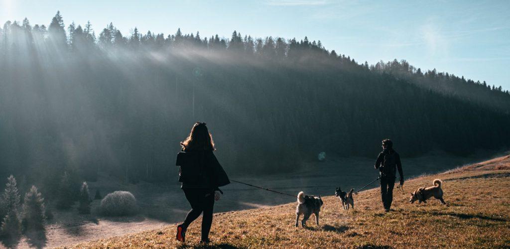 Cani-rando © RefuseToHibernate / Jura Tourisme