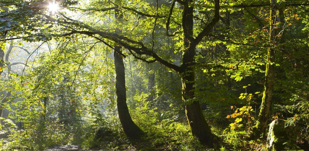 Forêt de la Serre © Stéphane Godin / Jura Tourisme
