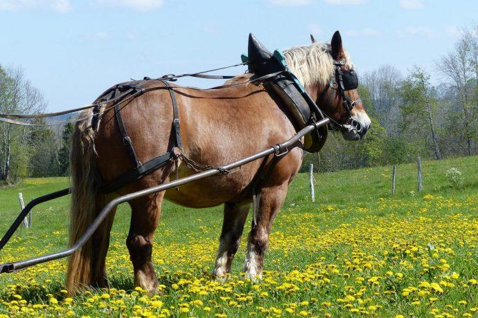 009-cheval-arnache-3495969