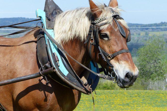010-cheval-arnache-3495970
