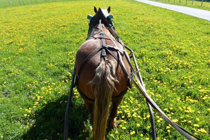 011-cheval-arnache-3495971