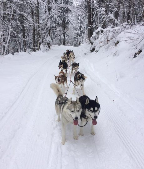 Mushing Adventures
