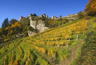Vins et gastronomie dans le Jura