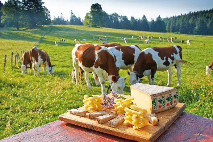 ambiance-degustation-champetre-2013-avec-vaches-cigc-jean-pierre-van-der-3920685