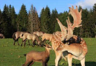 En famille à la campagne à la découverte des animaux